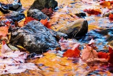 20386254-reflets-colorés-sur-l-eau-à-l-automne-fallen-feuilles-d-érable-menées-en-aval