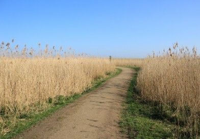 A high angle shot of a path in the wheat field with the blue sky in the background