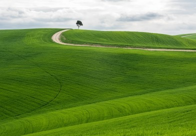 A horizontal shot of an isolated tree in a green field with a pathway under the cloudy sky